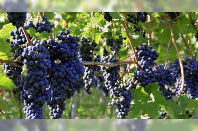 Der Wein soll im Mittelpunkt stehen