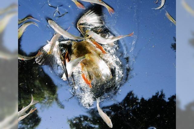 Flussaue in Rupperswil: Mehr Raum für Tiere und Pflanzen