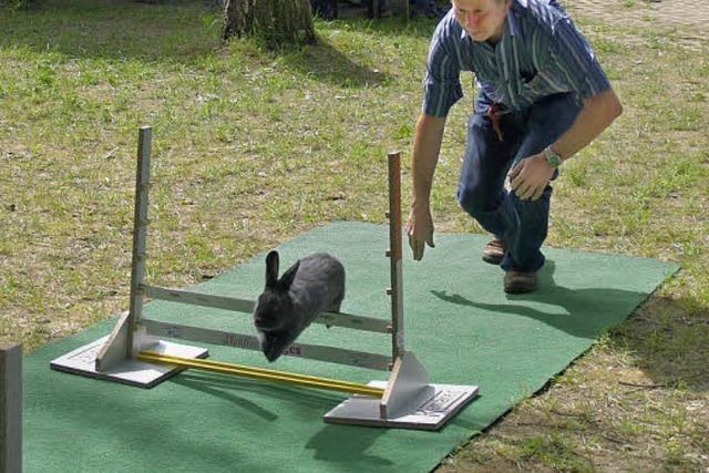 Kaninchen, hopp über die Hürden!