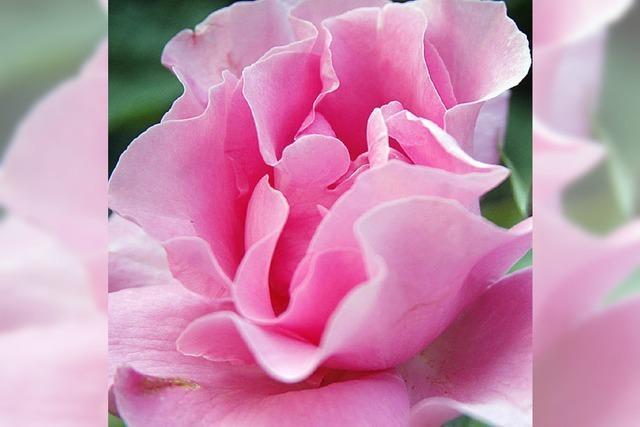 Dufte Blumen, rosiges Eis und viel Musik