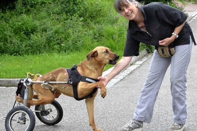 Geselliger Wandertag mit Hunden