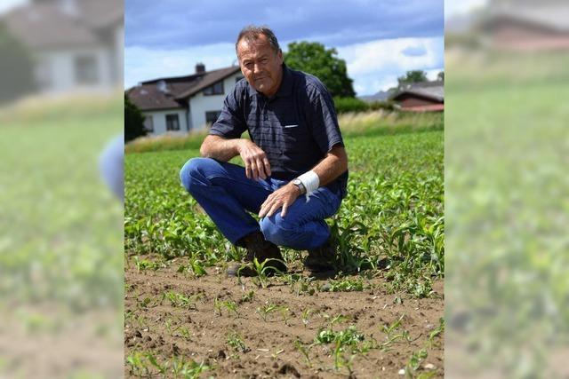Abschießen, aufhängen: Radikale Methoden gegen Saatkrähen