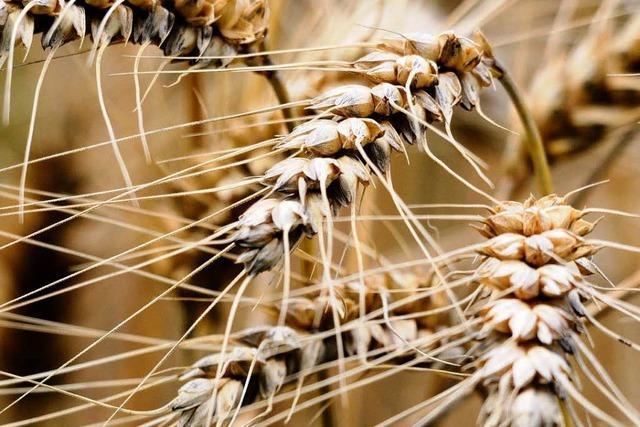 Deutschland muss Getreide importieren