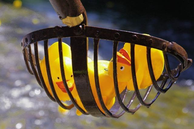 Sonnenschein beim Entenbad