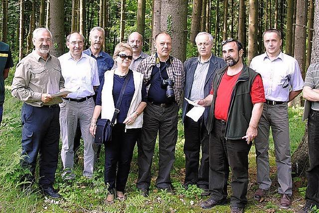 Der Wald wird umgebaut