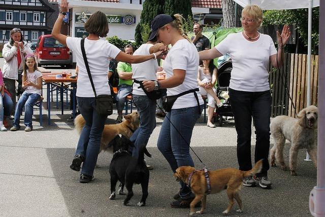Engagement für Tiere stößt auf großes Interesse