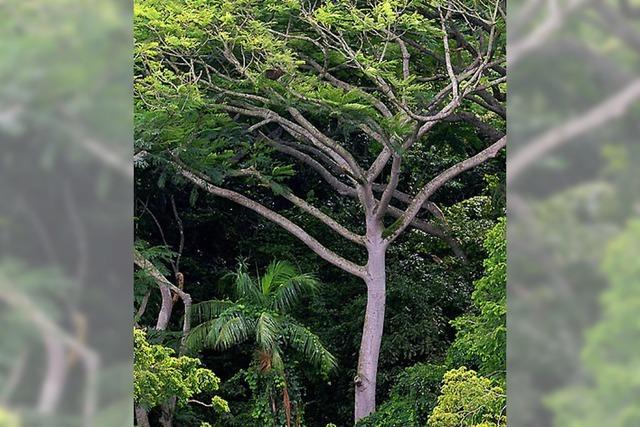 Mehr Bäume für den Wald