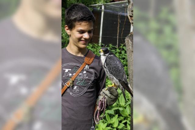 Der zwölfjährige Ricardo Pinto aus Merdingen arbeitet mit Greifvögeln