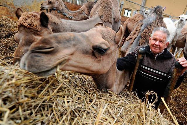 Schwarzwald-Kamele suchen neuen Besitzer
