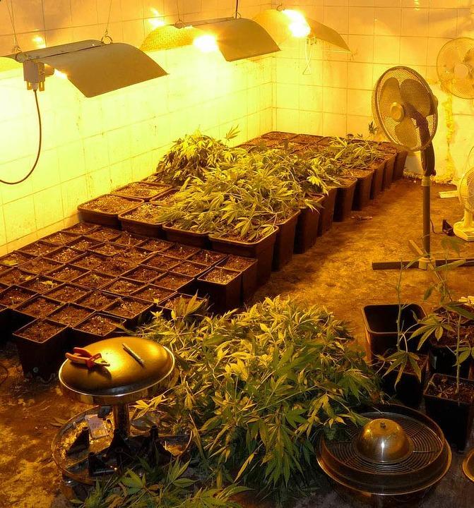 Indoor-Plantage in Oberkirch.  | Foto: Polizei Offenburg