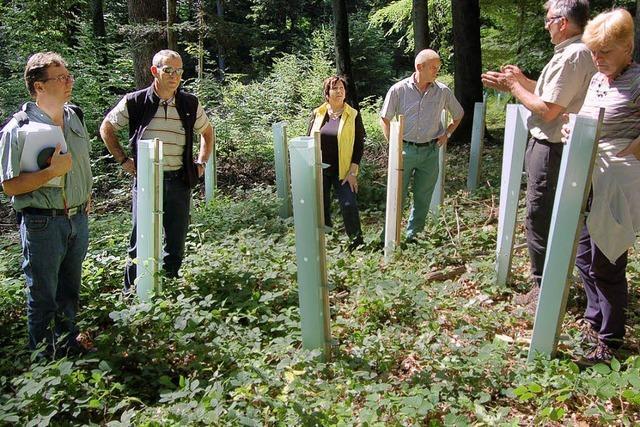Ein Rekordjahr für den Gemeindewald
