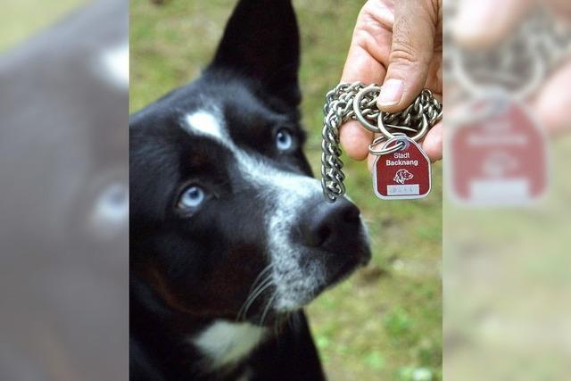 Gemeinderat beschließt Erhöhung der Hundesteuer