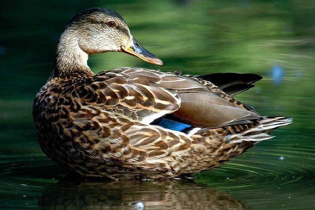 Vogel- oder Gewässerschutz? Naturschützer im Dilemma