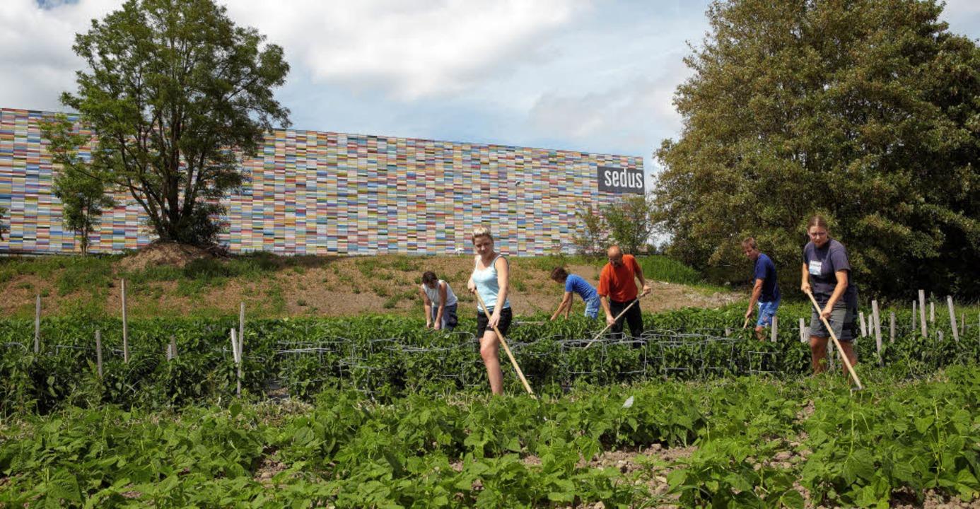 Das Gemüse für die Sedus-Kantine kommt aus dem eigenen Ökogarten.   | Foto: SEDUS STOLL