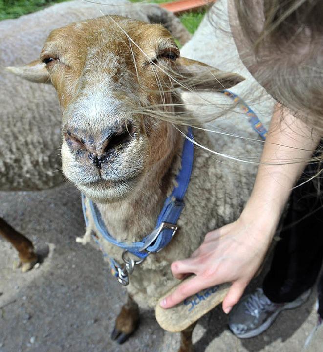 Streicheleinheiten für die Seele – und fürs Schaf.  | Foto: Michael Bamberger