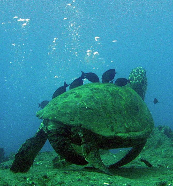 Abenteuer Tauchen: Schildkröte auf Erkundungstour  | Foto: Stefan Rother