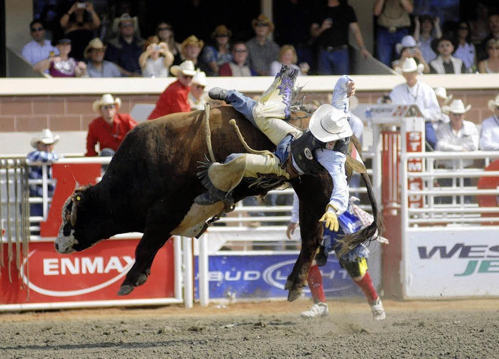 Das kann  nicht gesund sein: Ein Cowbo...– Bucked Off – abgeworfen.  | Foto: Birgit-Cathrin Duval