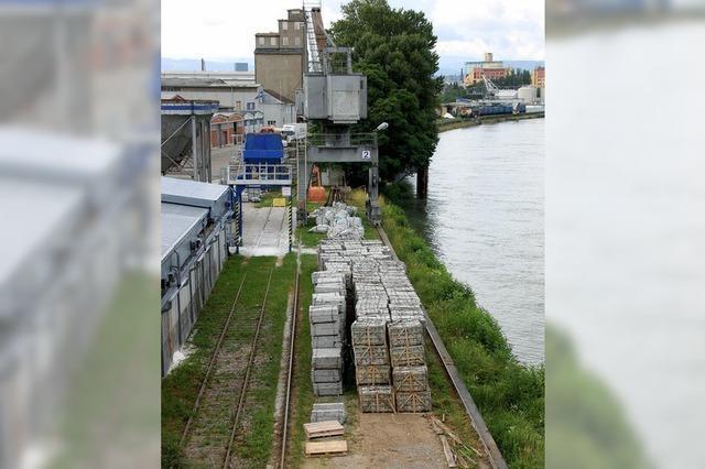 Asiatischer Laubholzbockkäfer: Friedlinger Hafen wird Quarantänezone