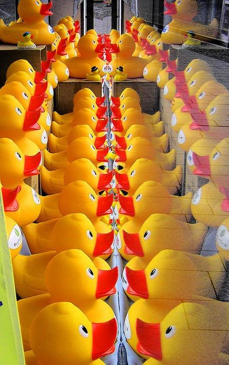 Alle meine Entchen: Beim Entenrennen d...enster der Volkbank ausgestellt sind.     Foto: Gerhard Walser