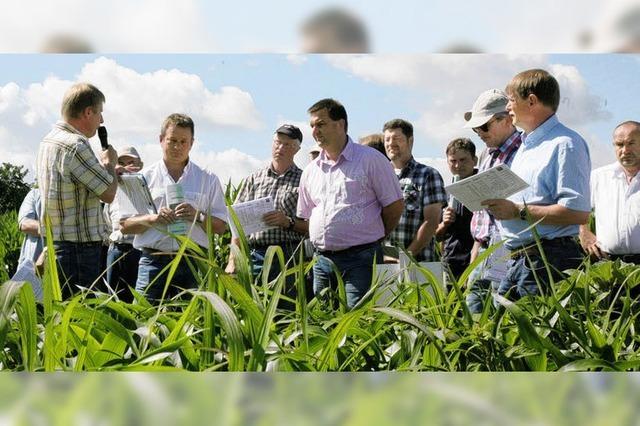 Landwirte erwarten eine gute Ernte