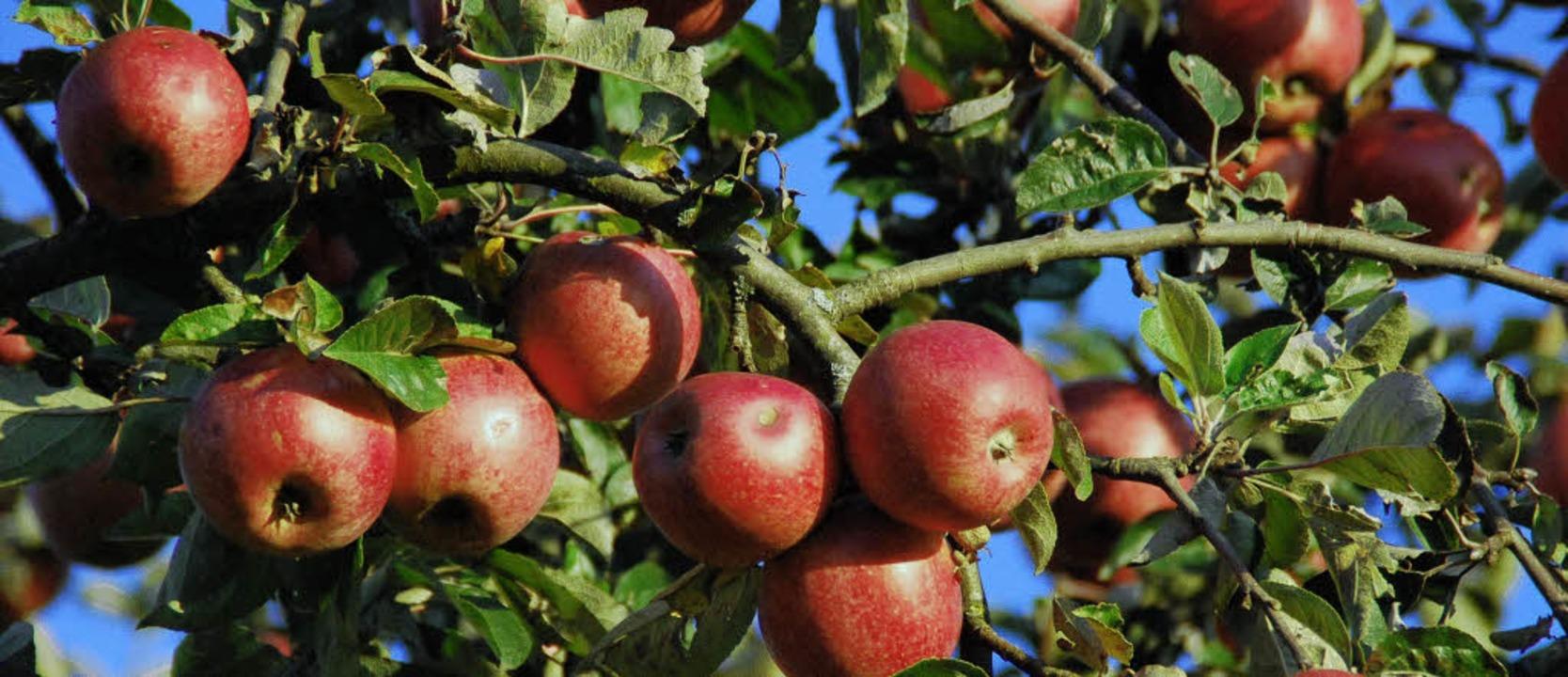 Obst ist für alle Sinne ein Genuss.   | Foto: Angelika Schmidt