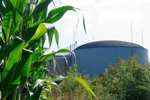 Biogas heizt Kampf um Pachtland im Südwesten an
