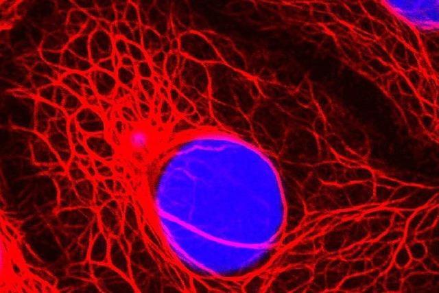 Helfen alternativmedizinische Therapien gegen Krebs?
