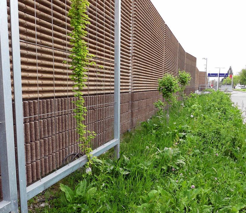 Das Grün entlang der Schallschutzwand ...äter von der Gemeinde gepflegt werden.  | Foto: langelott