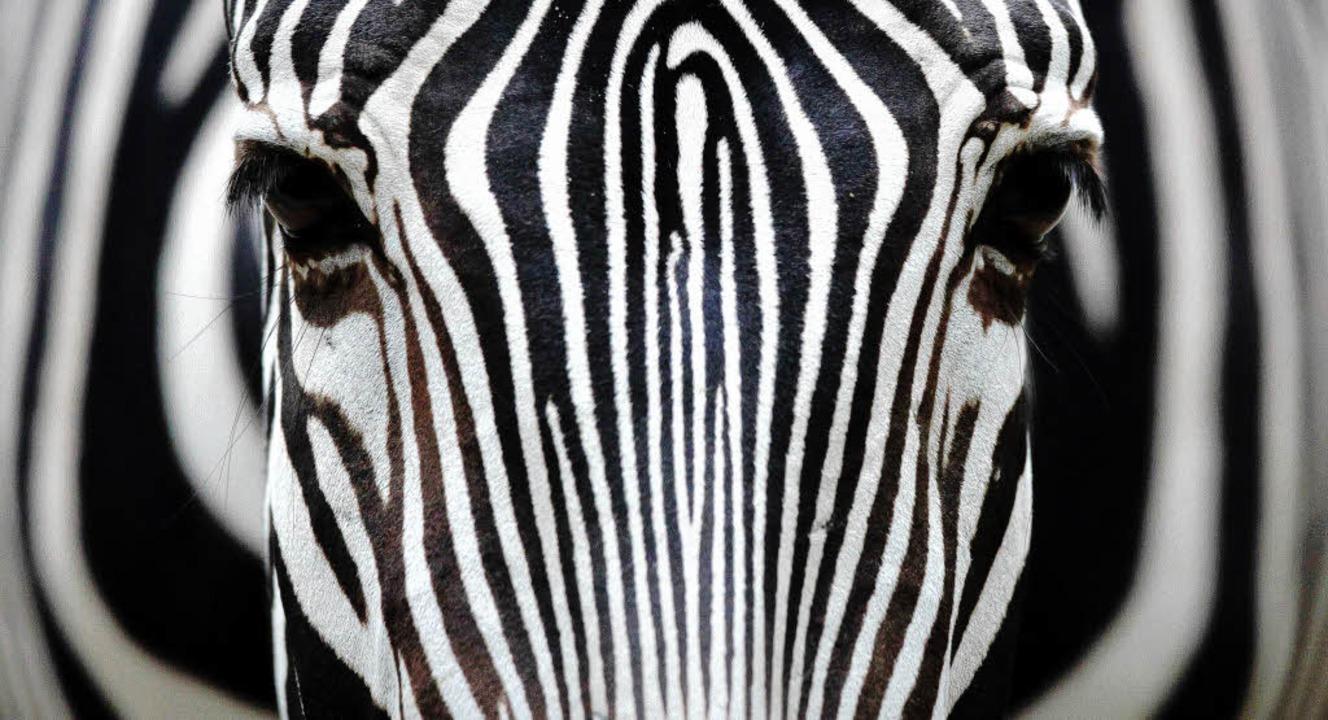 Mit Zebras hat der Straßenstreifen im ..., bei gefährlichen Stellen auch rote.     Foto: FOTOS: dpa/BZ