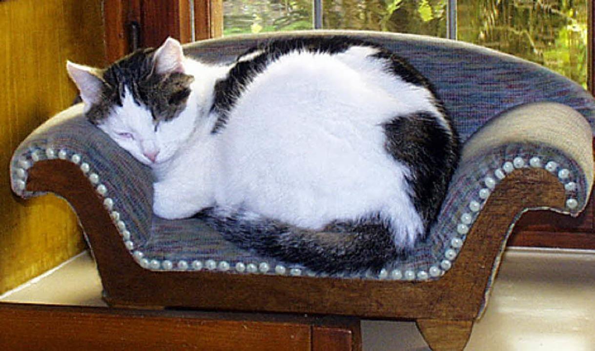 Nicht alle Katzen haben so ein gemütli... - wenn sie Glück haben - im Tierheim.  | Foto: Christa Maier