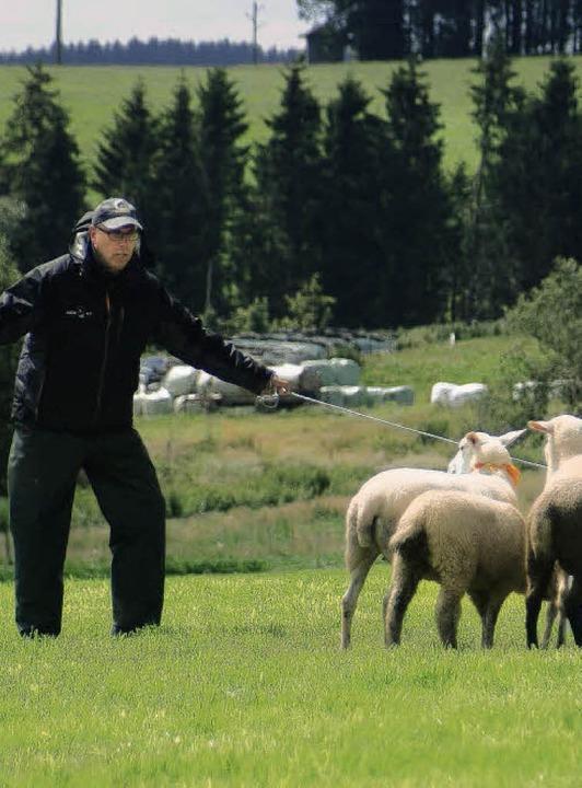 Der amtierende deutsche und baden-würt...oarder Collie Sid die Schafgruppe ein.  | Foto: Christian John