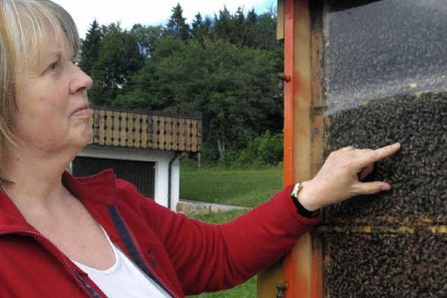 Der Honigertrag ist noch völlig ungewiss