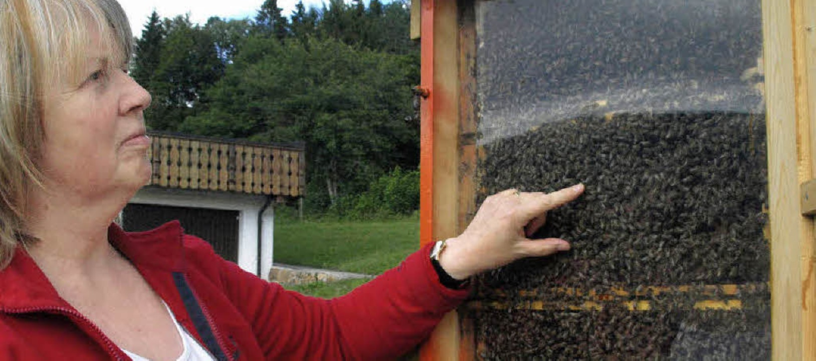 An ihrem Schaukasten in Horbach kann A...as Leben in einem Bienenstock erklären  | Foto: Karin Stöckl-Steinebrunner