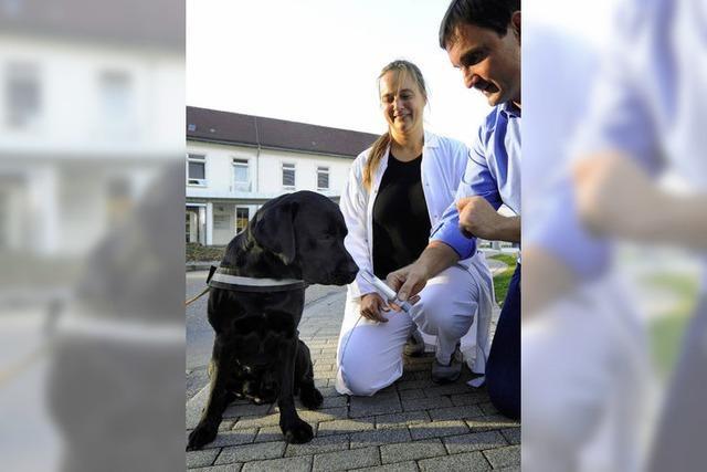 Der Krebsspürsinn der Hunde