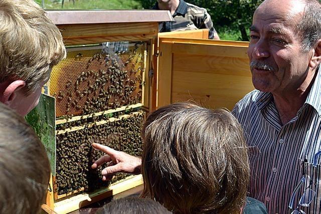 Nützliche Honigbienen