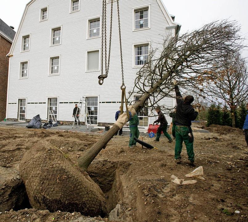 40 Großbäume, die eine Spezialfirma au...urden rund um das Bell Rock gepflanzt.    Foto: Europa-Park
