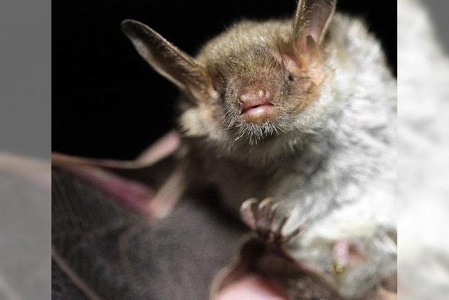 Friedrich Kretzschmar spricht über Fledermäuse