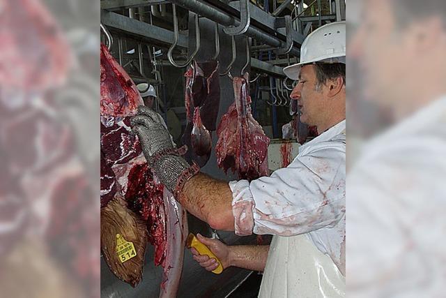 Von lebendigem Käse und gefährlichen Salmonellen
