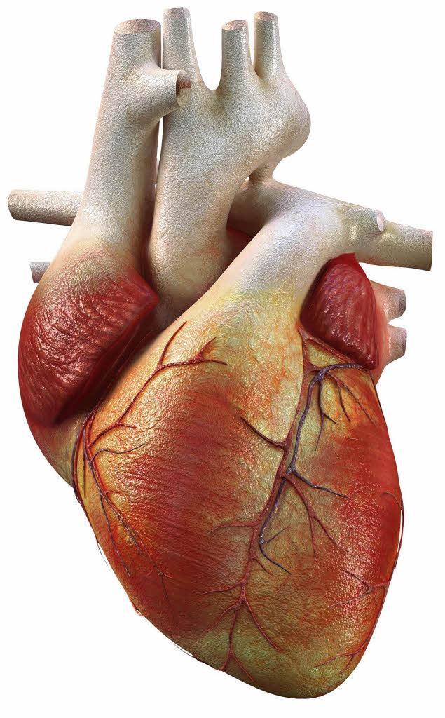 Männliche Herzinfarktpatienten ändern ihr Verhalten nicht ...