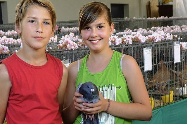 150 Tauben und Hühner bei der Kreispokalschau
