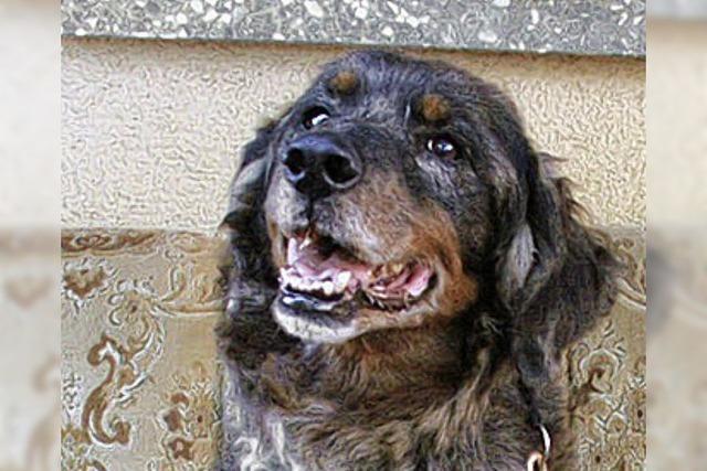 Zwei Hunde im Rathaus gestrandet