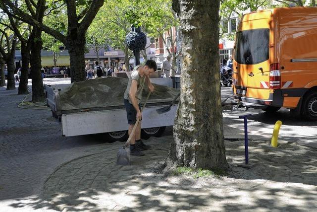 Frischzellenkur für Bäume