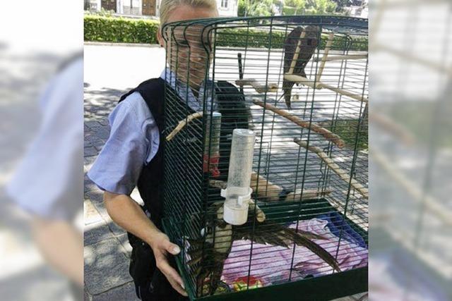 Zwei Vögel in Polizeigewahrsam