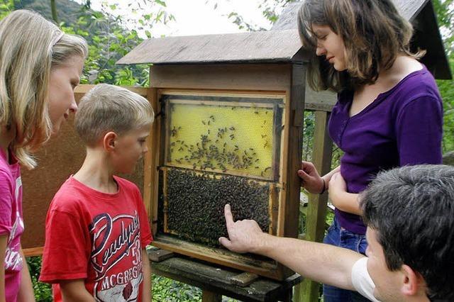 Imker fleißig wie Bienen