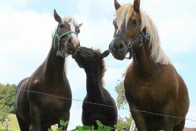 Pferde locken ins Tal