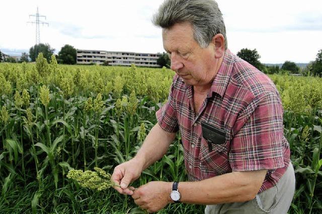 Nicht alle Landwirte freuen sich übers Wetter
