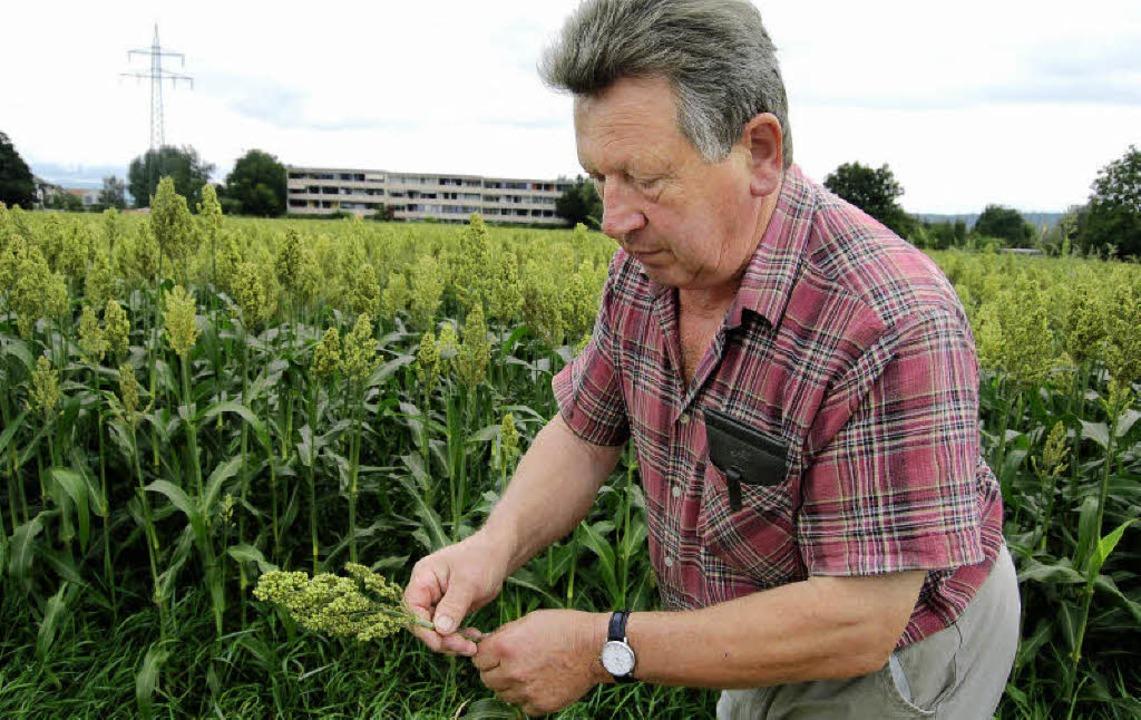 Getreidebauer Stefan Mehlin hat erstma...umhirse angepflanzt und ist zufrieden.  | Foto: Petra Wunderle