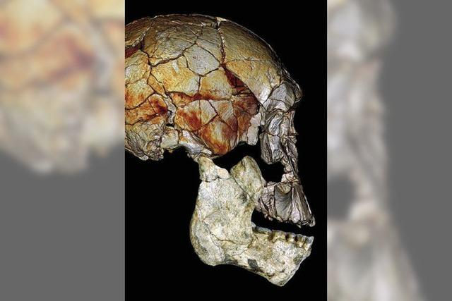 Fossilienfunde belegen weitere Menschenarten in Afrika