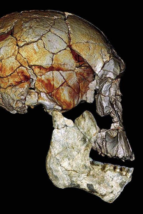 40 Jahre dauerte die Suche von Maeve L...ses 1972 gefundenen Schädels teilten.   | Foto: dpa