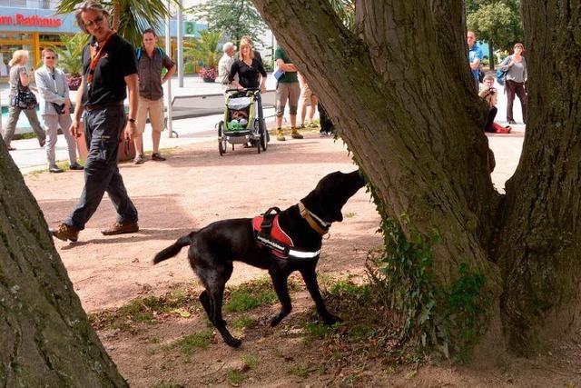 Hunde spüren in Weil am Rhein den Laubholzbockkäfer auf